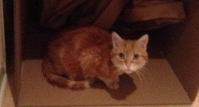Cafrey - London Life UK's Official Cat 18