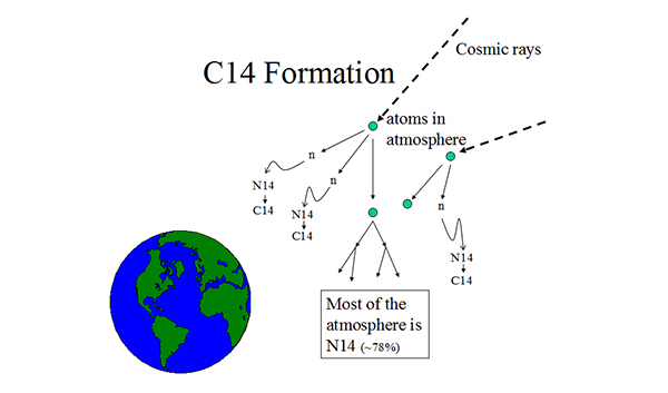 Figure 3. Carbon-14 formation. Cosmic rays continually bombard the earth. When they strike atoms in the atmosphere, chain reactions occur, some of which result in free neutrons (n) that readily react with nitrogen-14 to form C14.