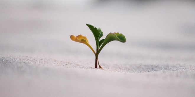 """3 Ways to Add """"Miracle-Grow"""" to Your Seed of Faith"""