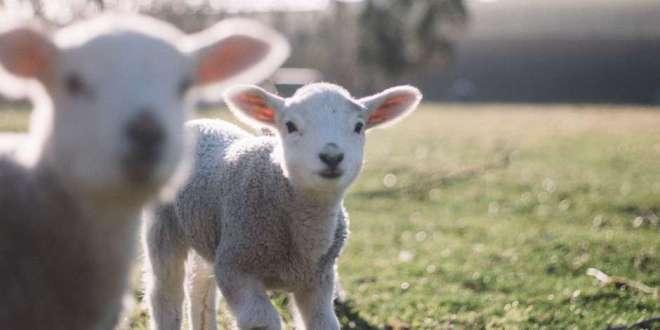 I Am the Good Shepherd | 5 May 2019