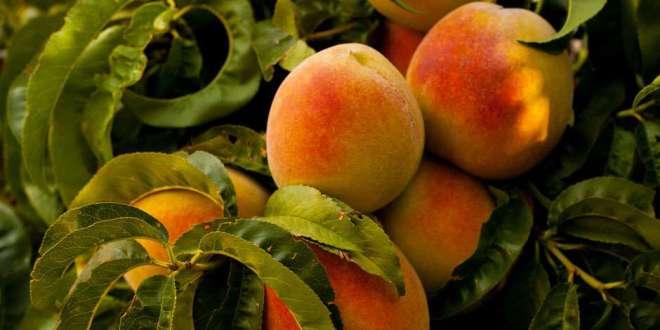 Bring Forth Good Fruit | 14 October 2020
