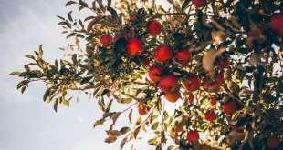 Receiving in Abundance & Thankfulness