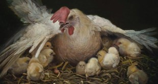 Doctrine and Covenants FHE Lesson - As a Hen Gathereth Her Chickens
