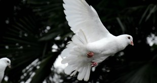 The Holy Spirit of Promise 1 April 2021