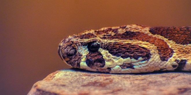 You Can't Pet a Rattlesnake   27 July 2021