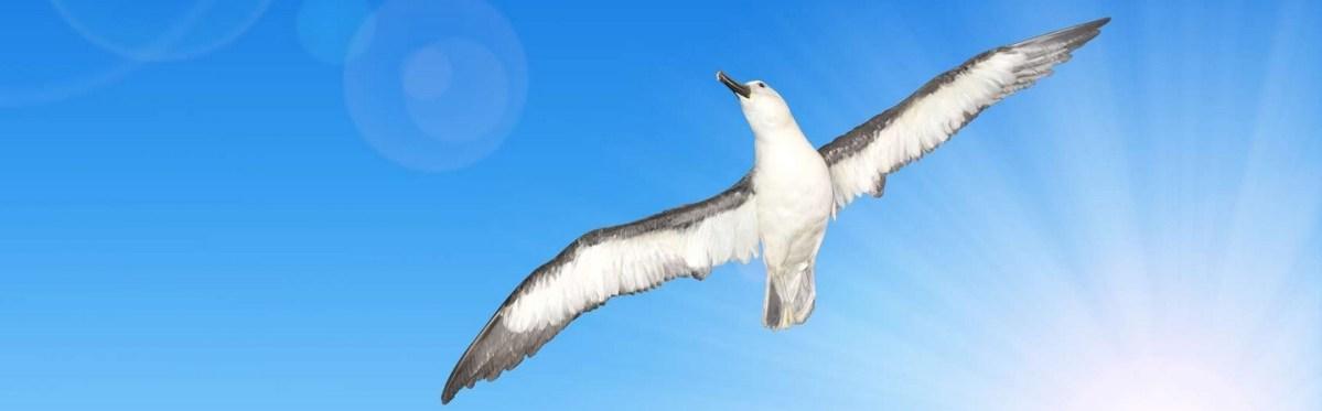 Le complexe de l'albatros