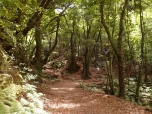 La forêt de Los Tillos (2)