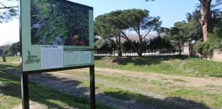 Argelès-sur-Mer : L'exposition « El bosc d'aquí » au cœur du village