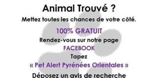 pet-alert-une-page-facebook-pour-retrouver-votre-animal-perdu