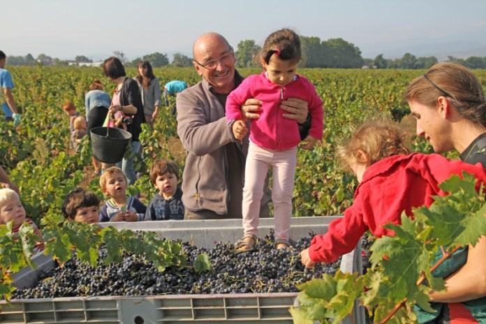 le-vin-produit-au-soler-sexporte-partout-dans-le-monde-de-la-belgique-a-la-chine