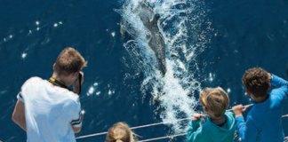 baleines-et-dauphins-au-large-des-cotes-de-canet-en-roussillon
