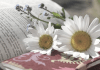 jardins-et-poesie-la-visite-guidee-insolite-et-exceptionnelle-de-perpignan-tourisme