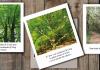 lancement-du-concours-photo-les-arbres-extraordinaires-de-la-vallee-de-lagly