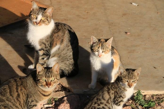campagne-de-capture-de-chats-errants