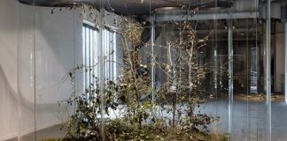 exposition-de-daniel-steegmann-mangrane-a-liac-villeurbanne