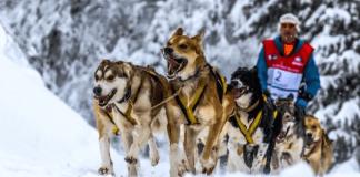daniel-juillaguet-une-figure-phare-du-mushing-francais-part-a-la-recherche-du-graal-des-chiens-de-traineaux-la-yukon-quest