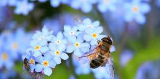 mécanismes, évolutions et perturbations des régulations sociales dans les colonies d'abeilles