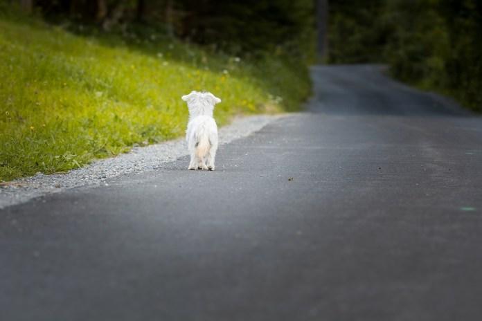Abandon animal en période estivale la campagne « ils partent avec nous ! » revient en force pour lutter contre ce fléau2