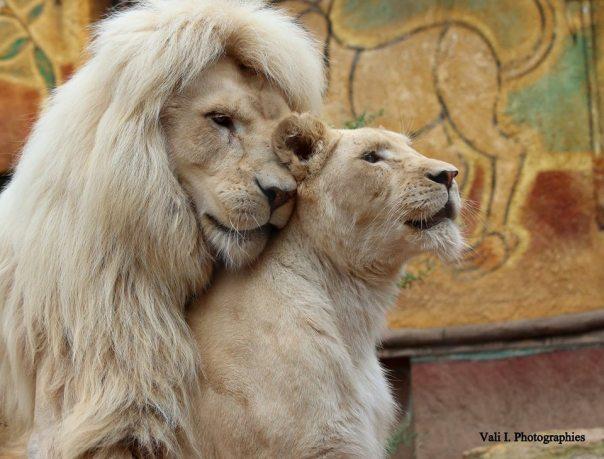 lion-amnéville