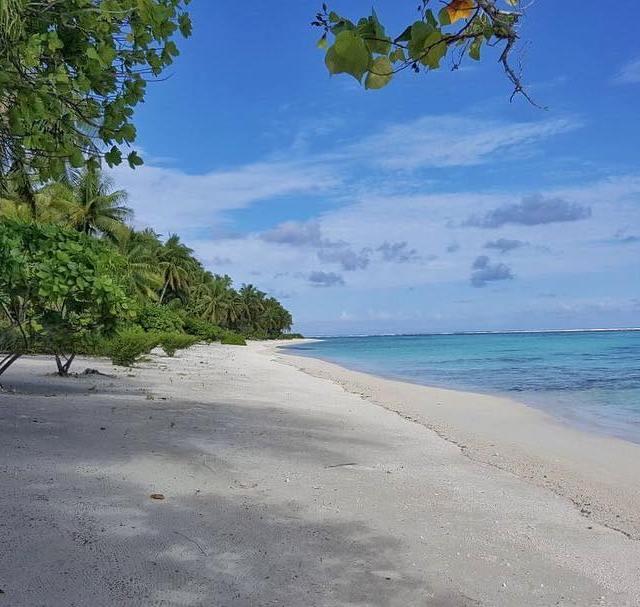 En direct de la plage du thebrandoresort oovatu polynesia paradisehellip