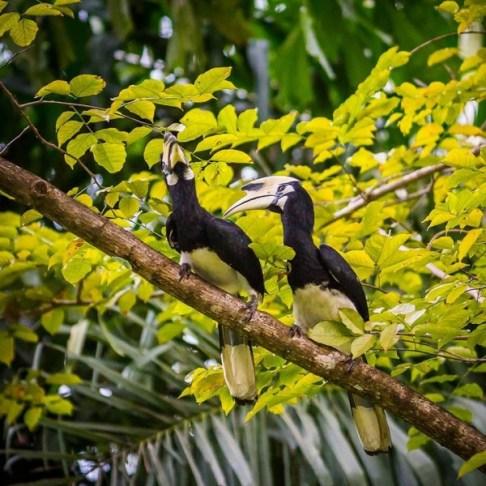 Les toucans de Koh Yao Noi au Paradise Koh Yao