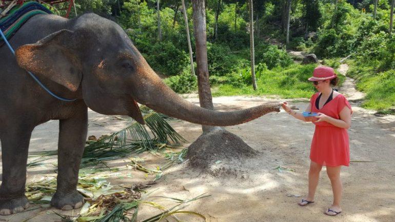 Adeline à la rencontre d'un éléphant d'Asie