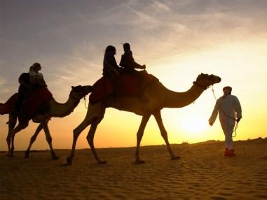 Les balades à dos de chameau sont des excursions régulières dans l'émirat