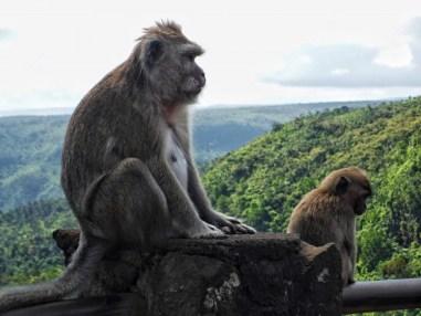 Les singes au point de vue du parc national