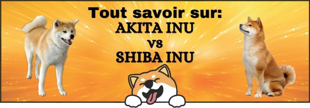 Guide complet Differences Akita inu Shiba Inu