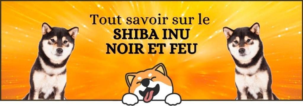 Tout savoir sur le shiba inu noir et feu