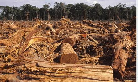 Déforestation : WWF met en cause les biocarburants