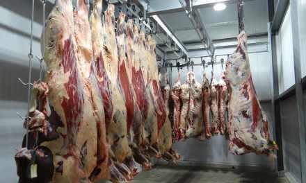 Viande avariée polonaise : 800 kilos retrouvés en France