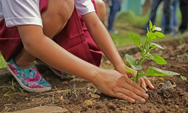 Incendies en Australie : le navigateur Ecosia lance un projet de reboisement