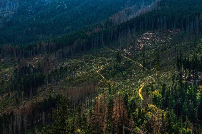 La WWF alerte sur le fait que cette destruction met en danger les écosystèmes vulnérables que les forêt abritent. Crédit : Unsplash par Janusz Maniak.