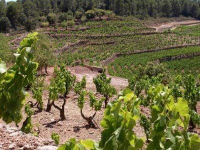 Acustic-Cellar-Monsant-Vineyards
