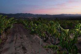 Bodegas Acustic - Montsant - Sunset