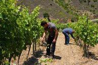 El-Perer-working-Bodega-Marco-Abella-Priorat