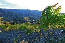 Marco-Abella---Vineyards---Schist