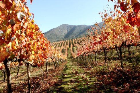 Tremonte Vineyard - San Vicente de Tagua Tagua, Chile