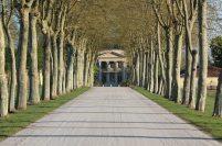 Chateau Margaux Blog