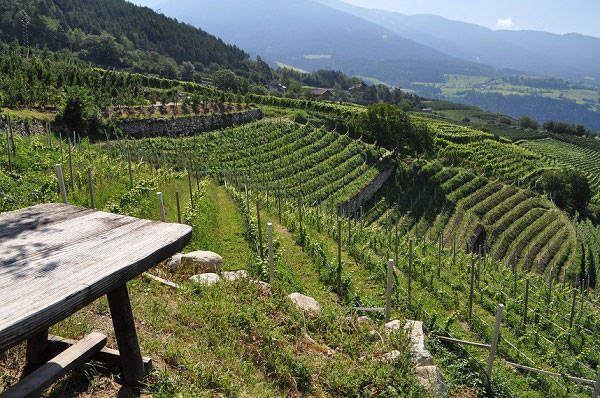 Mani-Nossing-Vineyards-Email-Vinous