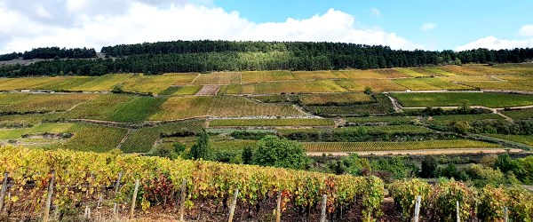 Burgundy vineyard landscape