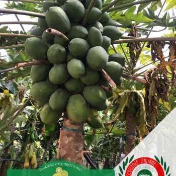 Leader-Frutta-Giarre (13)