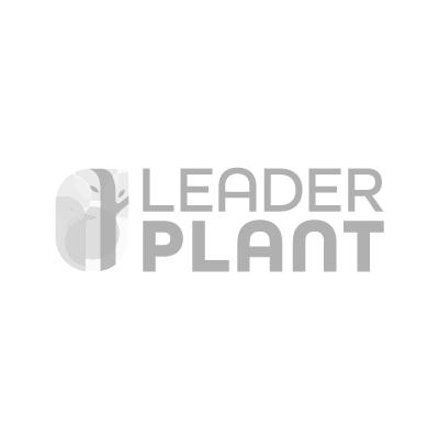 Ciboulette Vente En Ligne De Plants De Ciboulette Pas