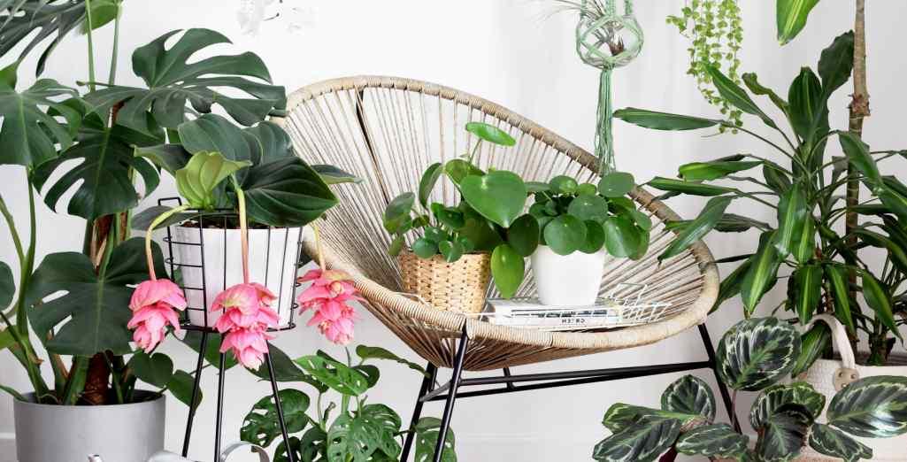 entretien des plantes d