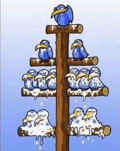 chrislakeblog_birds