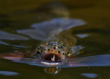 Fish eating insect