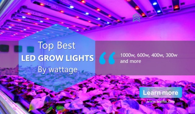 1000 Watt Grow Light 600 Watt Grow Light 300 Watt Grow Light 600 Watt Grow Light 400 Watt Grow Light