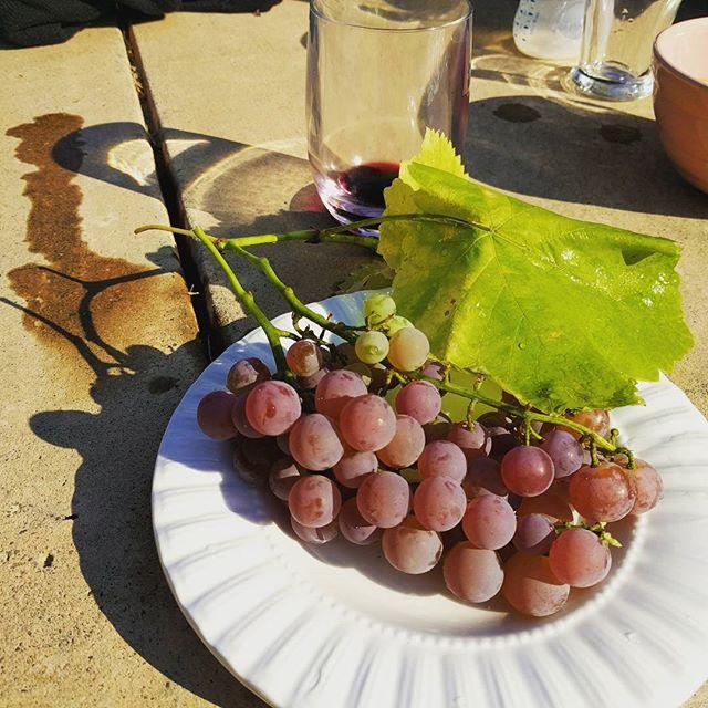 Straight off the vine. #winecountry #justwaitingtobecomewine