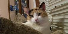 Photo Rosalina aka Rosie aka McMac Fluff Tail